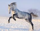 Воронцовский конный завод